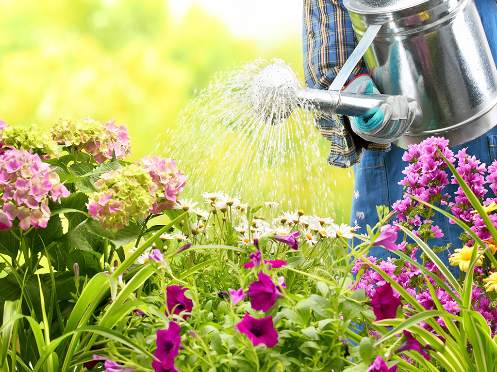 sproeien van bloemen